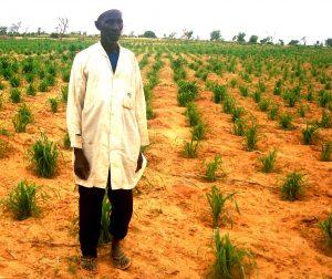L'agriculture durable au service de la lutte contre la faim et la malnutrition